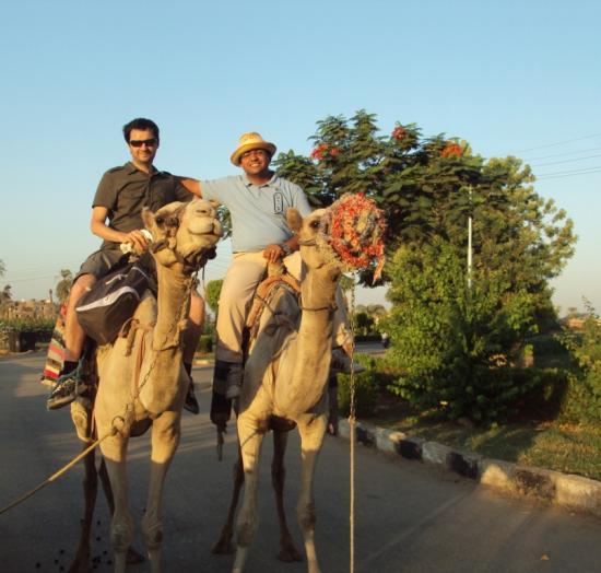 chameaux-louxor-guide.jpg
