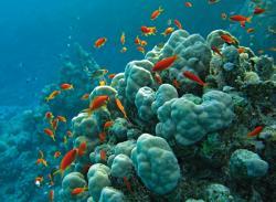 red-sea-20101216-160320.jpg